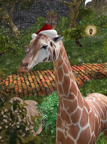 Santa Giraffe at The Jungle 12-12-2008