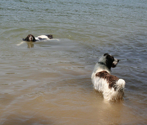 Charlie & Casey Swimming