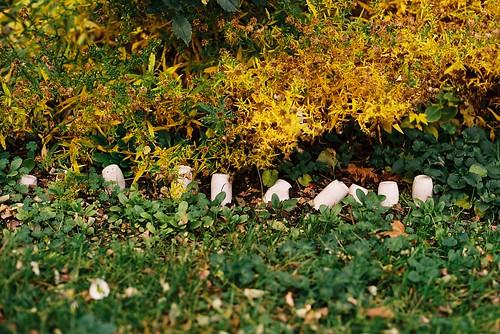 Guerrilla garden detail