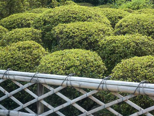 Ryoanji gardens