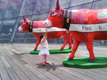 touching the cow