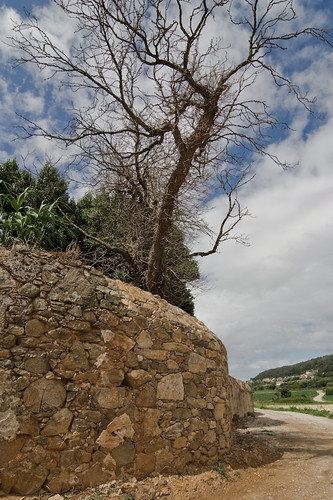 Árbol y muro