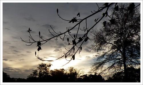 Rarly Morning Sky