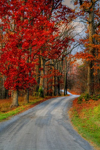 Autumn's Country Road
