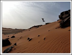 Jumping in The Sahara