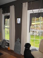 dark halloween curtains