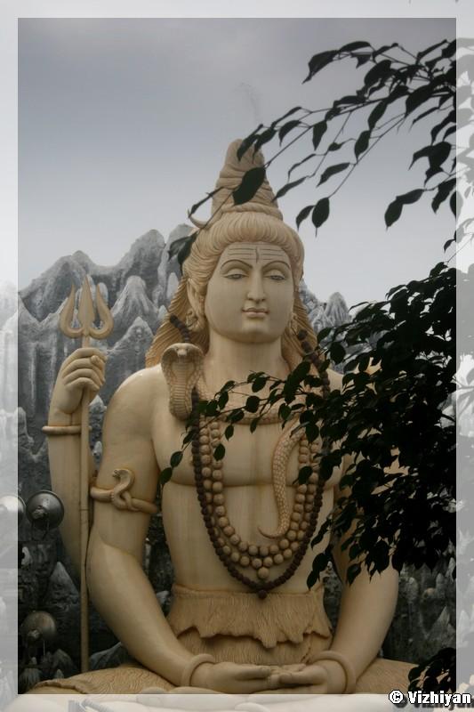 Shiva -Leaves