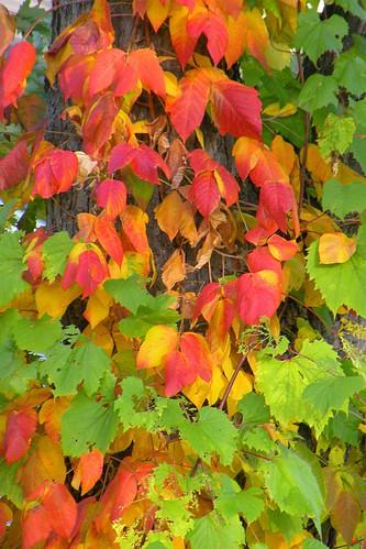 Fall Colors -- DSCN4980