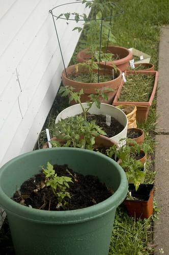 Container Garden Birth