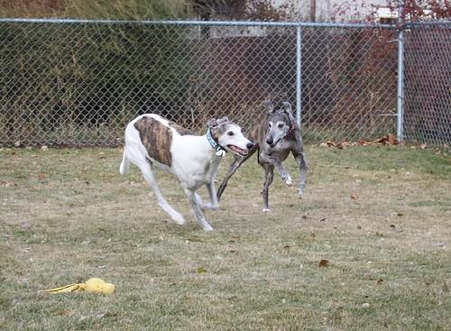 Apollo loves to run