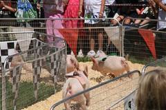 2008-08-23-MV-trip-fair-pig-race3