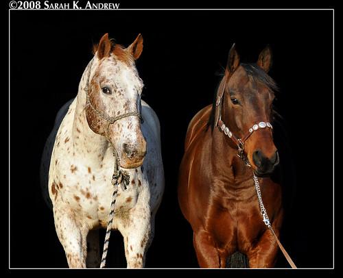 Lakota and Shiloh