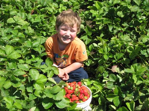 Jacob Picking 1