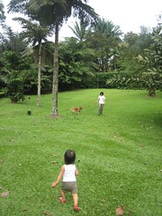 chasing papa and koda!
