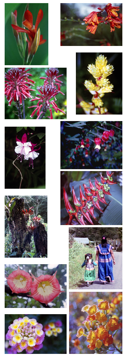 Panama Guadalupe Wildflowers.jpg