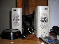 speaker cat