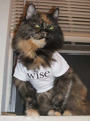 Cats in Shirts....its all the rage by you.