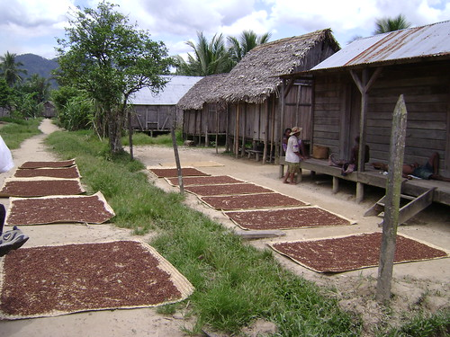 Malagasy homes, with cloves spread out on the ground to dry.