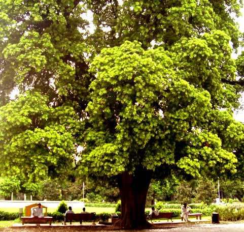 Lawrence Garden Memories, Lahore