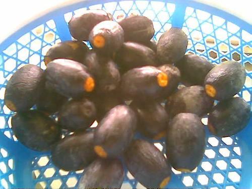Sibu's dabai (black olives)