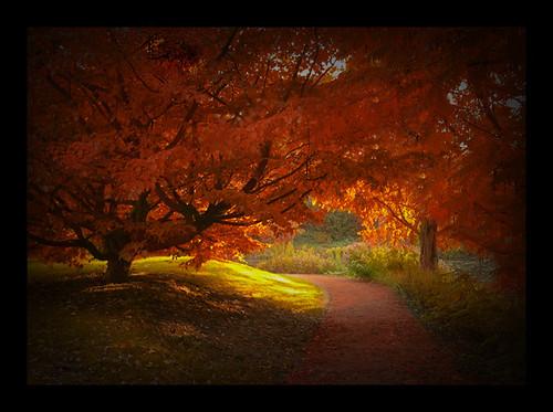 Autumn_I_by_JaneDoe87