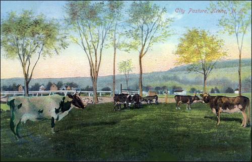 City Pasture, Keene, NH