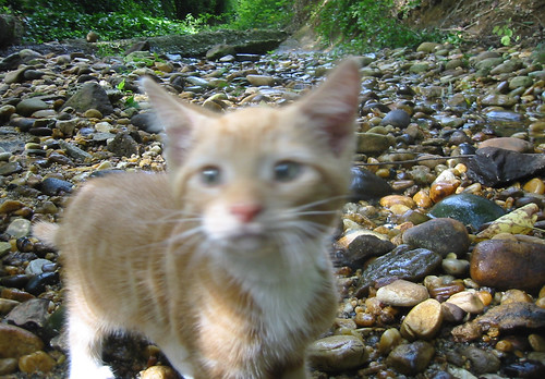 20080914 - cats visit our creek - 168-6809 - Lemonjello - rocks - blurry - outtake - please click through to leave a comment on FlickR
