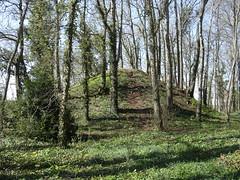 Les arbres sur la colline