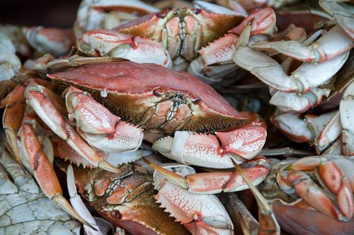 Crabs at Fisherman's Wharf