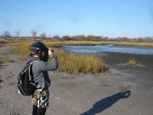 Plum Beach marshes