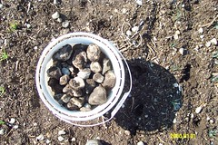 Rock harvest