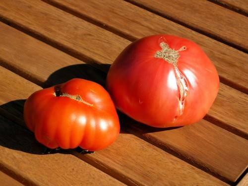 tomato1481