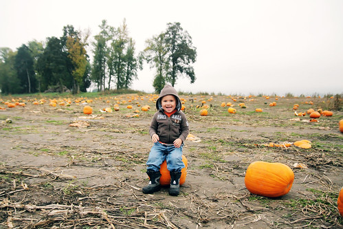 pumpkin patch 2008 007 copy by you.