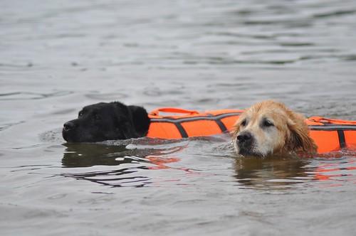 Eiko and Valéas swimming