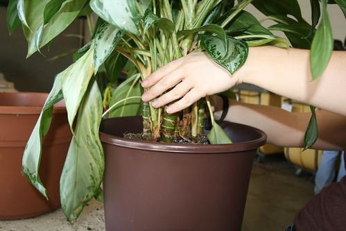 Adjust the plant