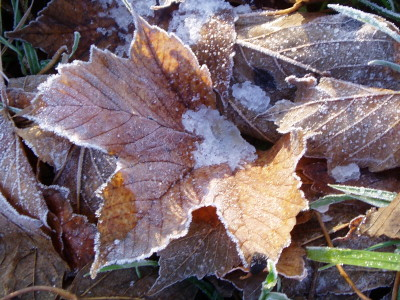 i love the way the frost has caught the edges of this leaf, and the puddle of ice in the bottom. this was a serious contender for the header photo.