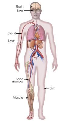 Μερικές από τις γνωστές πηγές βλαστοκυττάρων