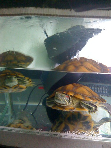 misbehaved pet turtles