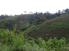 Villagers here cultivate crops on the mountain-side.