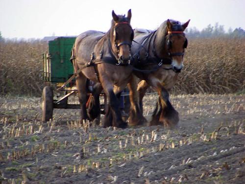 Langs de route...Paarden (3/6)