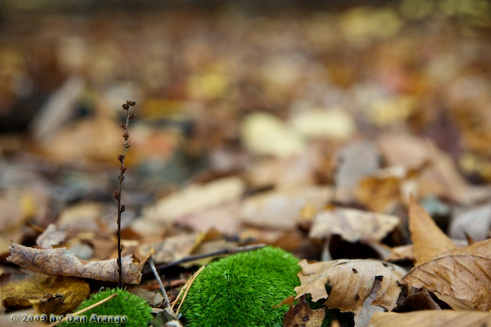 Small Life in an Autumn Forest