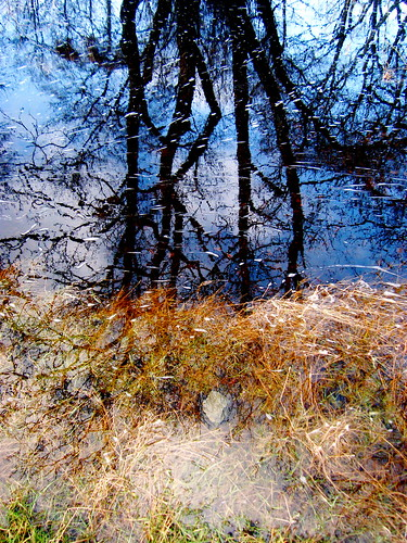 Branch Reflections 3