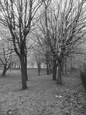 trees that i walk jess between in black and white - i think it captures the cold feeling perfectly
