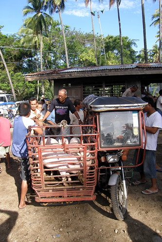 pigs, piglets, for sale, tricycle, rural Malapatay,Zamobanguita, Negros Oriental Philippines Buhay Pinoy  Filipino Pilipino  people pictures photos life Philippinen