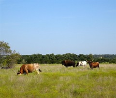 Liberty Hill Longhorns