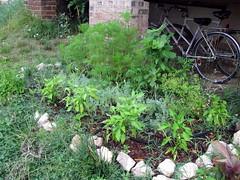 needs weeding: june