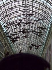 Eaton Centre geese