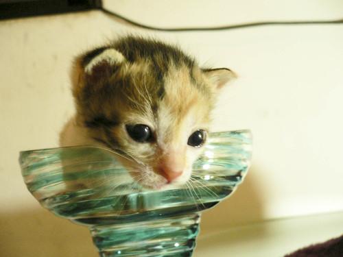 杯杯貓 @ 被貓撿到的幸福 :: 痞客邦