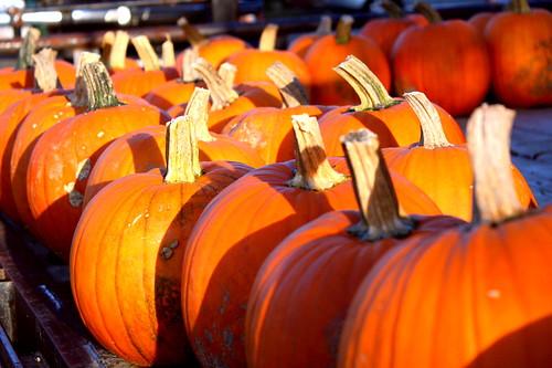 CSA Pumpkins