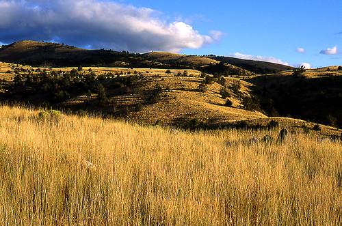 Paradise Valley, Montana. (Fuji Provia 100F. Nikon F100. Epson V500.)